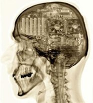 mammalian-brain-computer-inside.jpg